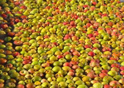 Manzanas en Valverán