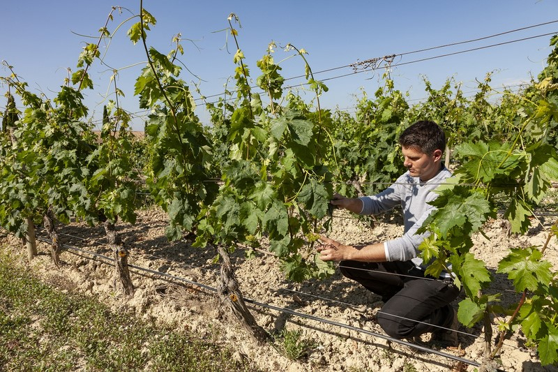 Murua Winery commits to organic viticulture and plans to have all their vineyards in this modality by 2026