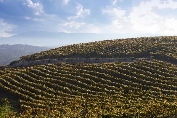 fillaboa viñedos